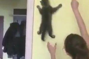 Котенку не рассказали о гравитации, поэтому он пробежался по стене