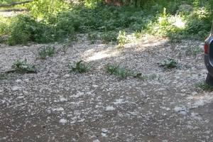 Киевляне против тополиного пуха: аллергики жалуются, что им трудно дышать