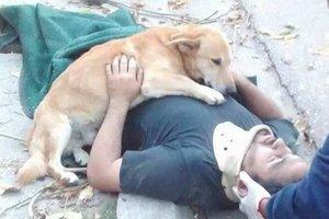 Верный пес не бросил хозяина, упавшего с дерева
