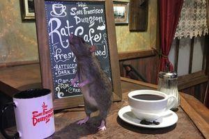 В американском кафе можно попить кофе в компании крыс