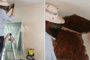 Американка обнаружила в потолке своего дома 120 тысяч пчел