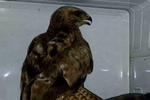 В киевском парке нашли хищную птицу
