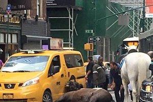 В Нью-Йорке испуганная лошадь врезалась в такси