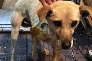 В Киеве изверги всадили в собаку 9 пуль и сломали ей передние лапы
