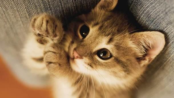 ВИрландии ищут наработу человека, который должен обнимать котов