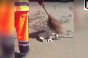 Видеохит: в Стамбуле уличная кошка позволила себя подмести