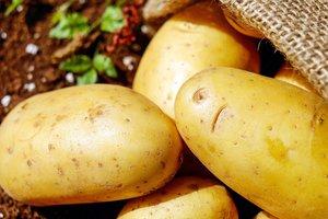 30 мая — Всемирный день картофеля: 5 причин не отказываться от