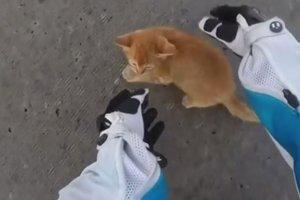 Храбрая защитница: женщина на мотоцикле спасла котенка на перекрестке с активным движением