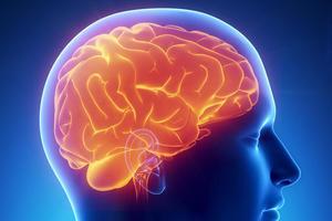 """В мозгу человека обнаружили """"GPS-навигатор"""""""