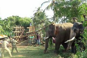 В Индии отправили на перевоспитание убившего девять человек слона