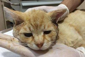 Найди друга: кот Тоша, которого хозяева хотели усыпить, ищет новый дом