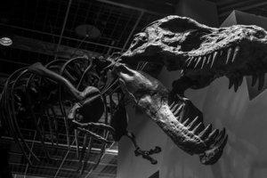 Ученые доказали невозможность воскрешения динозавров