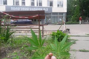 В Киеве возле роддома нашли коноплю
