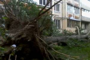 Кто должен убирать упавшие деревья в Киеве