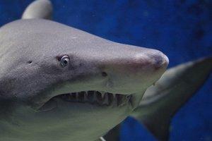 Американец снял схватку с акулой под водой