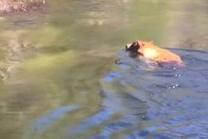 В США сняли на видео медведя, попавшего в водопад