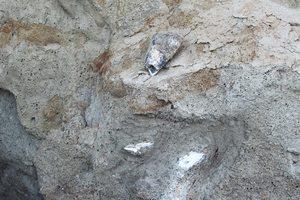 В Одесской области нашли останки древних животных