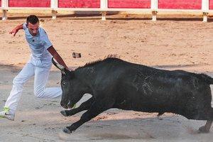 В Португалии бык поднял на рога снимавшего на iPad прохожего