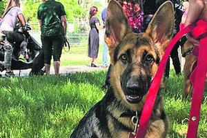В Одессе открыли площадку для выгула и дрессировки собак