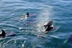 Дрон снял стаю дельфинов у берегов ЮАР