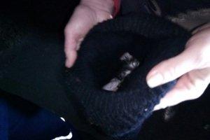 Под Киевом пожарные спасли крошечного котенка