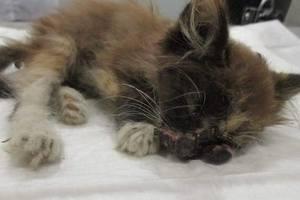 SOS: котенок, которому дети проломили голову и выдавили глаз, нуждается в помощи