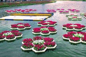 Клумбы Харькова: на воде, в тюбике краски и с 3D-эффектом