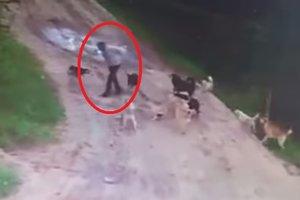 Камера наблюдения засняла, как стая собак насмерть загрызла россиянина (18+)