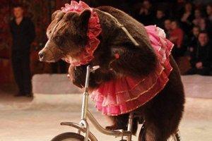 Сейм Латвии запретил использовать животных в цирке
