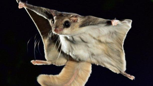 Видеохит: забавные летающие белки покорили интернет