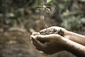 Юрлица могут получить право на покупку земли - Минагропрод