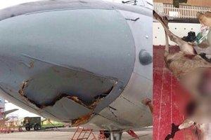 Российский военный самолет сбил лося