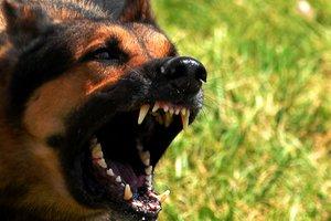 В Николаеве копы застрелили бойцовскую собаку, которая набросилась на хозяйку