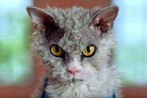 """Видеохит: Honda выпустила забавный ролик с """"напыщенным"""" котом"""