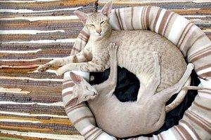 Ученые рассказали, как коты покорили древний мир