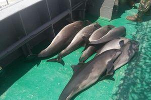 В Одесской области из-за браконьеров продолжают гибнуть дельфины