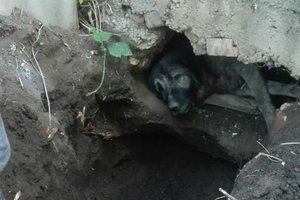 В Одессе спасатели вызволили пса, который несколько дней рыл себе