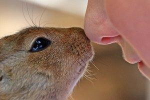 У чому головна відмінність між людиною і твариною: наукова відповідь