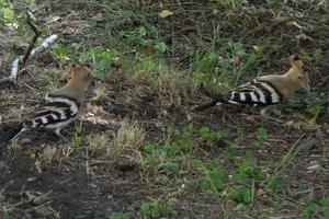 В центре Купянска заметили редких птиц