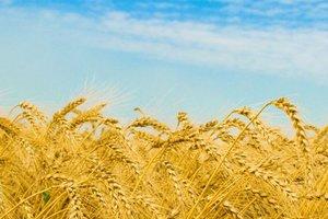 Прогноз щодо збору та вартості нового урожаю