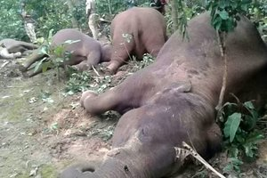 Семью слонов убило электрическим током