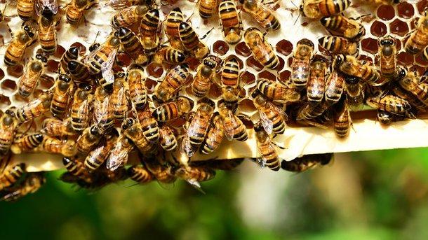 Ученые: Неоникотиноиды негативно влияют напопуляции пчел