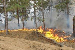 В Херсонской области тушат масштабный лесной пожар