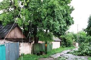 В Черниговской области смерч поднял и ударил об землю двух детей