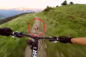 Cyclist started the race with a marmot on a mountain trail and lost