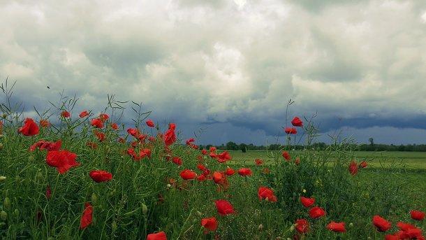 Погода в октябрьском районе гомельской области на 14