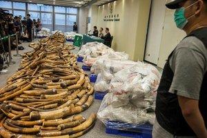 В Гонконге задержали крупнейшую за 30 лет партию слоновой кости