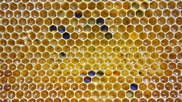 Украина активно продает мед. Фото: Pixabay