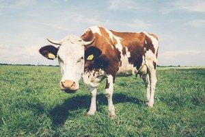 В Украине растут закупочные цены на молоко