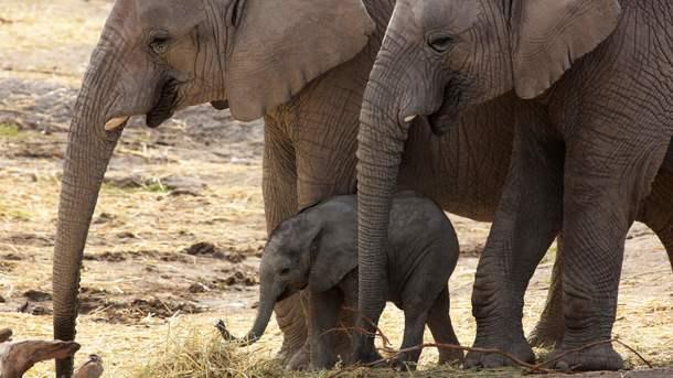 Как размеры животного влияют на скорость его передвижения: научный ответ